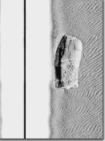 side scan sonar image of the F/V Josephine Marie