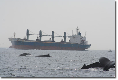 Tanker and Whales