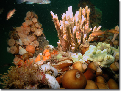 Sponges and other invertebrates