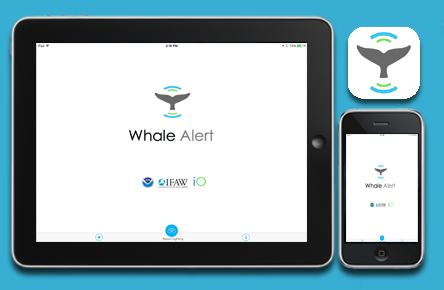 Whale Alert iPad and iPhone App