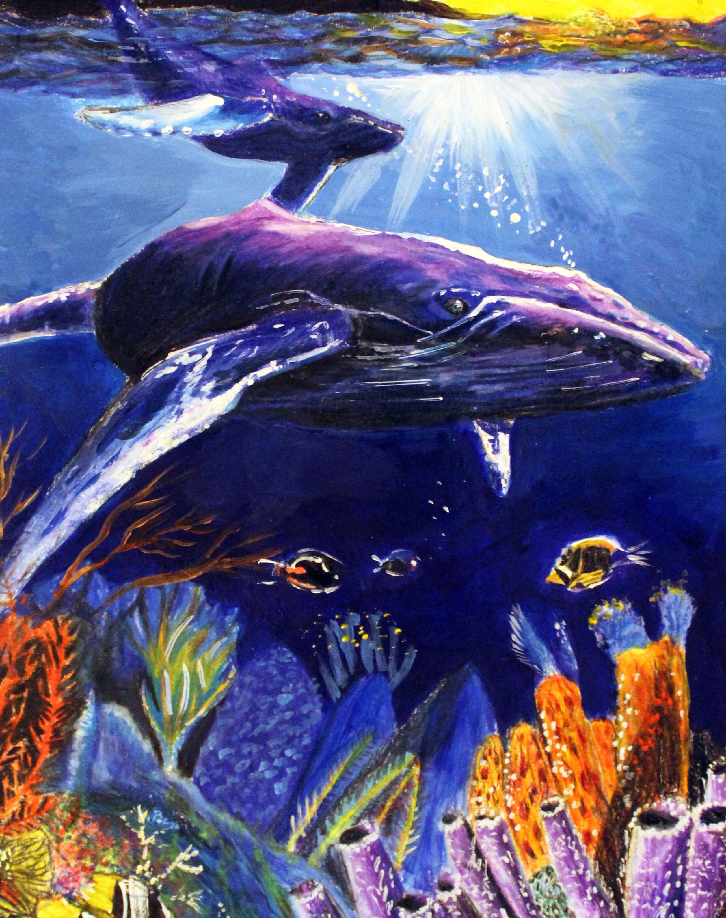 2019 Marine Art Contest - Scientifc Illustration